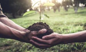 Lanzan campaña para  reforestar Nuevo Laredo