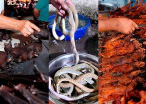 China prohíbe consumo de animales salvajes por coronavirus
