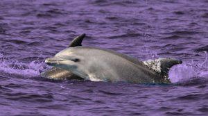 Ofrecen recompensa de 20 mil dólares por asesinos de delfines en EU