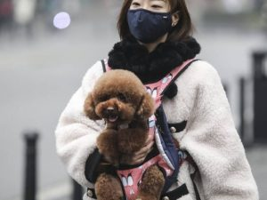 China ordena a ciudadanos deshacerse de sus mascotas ante Coronavirus; los arrojan desde edificios