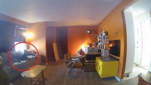 Perro travieso provoca incendio; se sienta a contemplar las llamas (VIDEO)