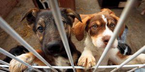 Arrancan adopciones gratis de mascotas