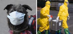 Primer perrito con coronavirus; su dueña lo infectó