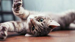 HOY es Día Internacional del gato, ¿Sabes por qué se celebra?
