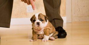 Estudio revela que puedes dañar la salud mental de tu perro si le gritas