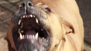 Registran 14 ataques de perros