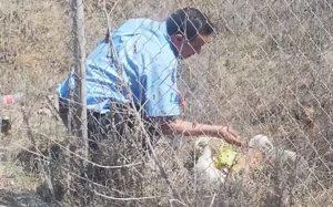 Chofer se detiene para darle agua a perritos