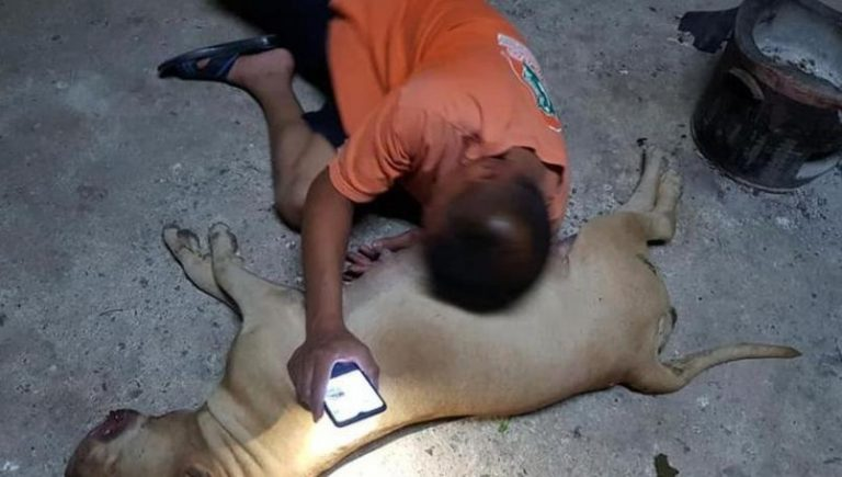 Perrita embarazada muere al salvar a sus dueños de una cobra