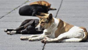 Delincuentes matan a perros para cometer robo a casa habitación en Puebla