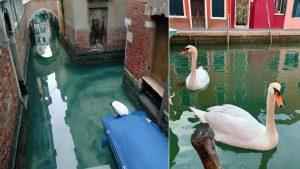 Así se puso el agua de Venecia ante paro por coronavirus