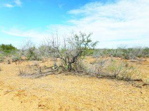 Escasez de lluvias genera días cálidos