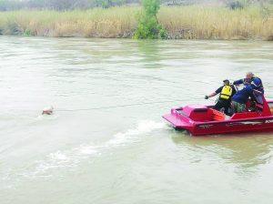 Rescatan  vaca del  río Bravo