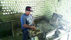 Caen 50% las ventas de masa y tortillas