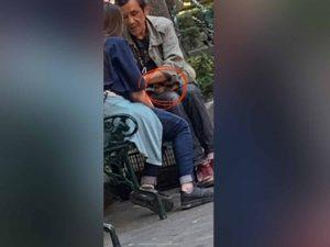 Rescatan a perrito que drogaban para pedir limosna