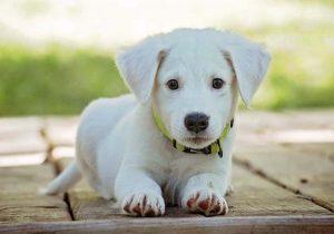 Salen hoy perritos de APA en busca de hogar