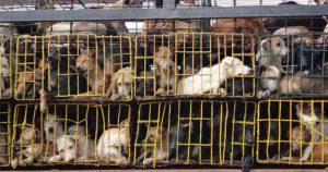 Cierra oficialmente el mercado de carne de perro en Corea del Sur