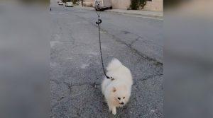 Pasea a su perro con un dron para no contagiarse de COVID-19