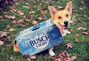 Cerveza gratis a quien adopte un perrito durante cuarentena; entérate como