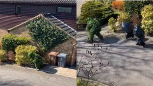Coronavirus: En Reino Unido hombre se disfraza de arbusto para evadir cuarentena VIDEO