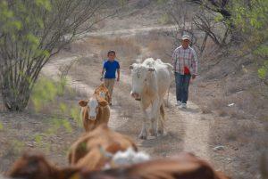 Comienza sequía a matar animales