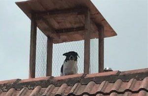 Familia le construyen torre de vigilancia a perrito chismoso