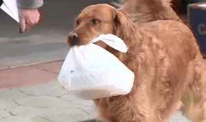 VIRAL: Perrito le entrega las compras a su vecina aislada por cuarentena