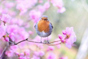 Equinoccio de primavera es hoy 19 de marzo: mira la hora de entrada