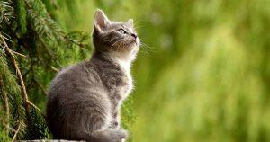 Gato fue contagiado de coronavirus por su dueña en Bélgica