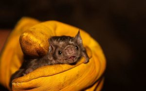 Queman murciélagos por miedo a coronavirus