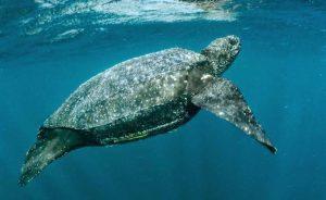 Cuarentena: Animales en peligro de extinción reaparecen en Cancún (VIDEOS)