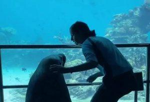 VIRAL: León marino da divertido paseo en acuario vacío por cuarentena