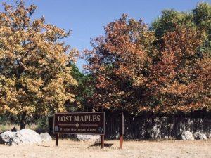 Covid-19: Cierran todos los parques estatales en Texas