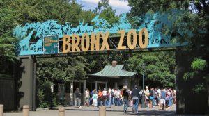 Primer animal contagiado de Covid-19 en el zoológico de New York