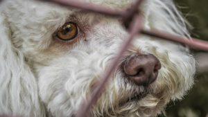 Coronavirus: Abandonan a mascotas por temor a contagio
