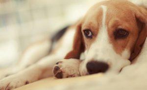 Dueños inquietos por extraño comportamiento de sus mascotas