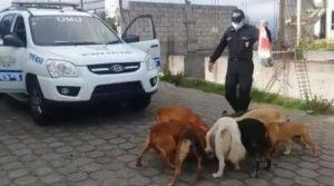 Policías salieron en plena cuarentena para alimentar a perros callejeros