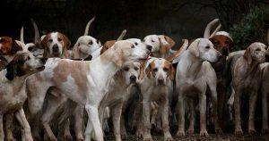 Prohibe ciudad de China consumo de carne de perros y gatos