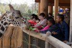Abren zoológicos en Texas tras cuarentena