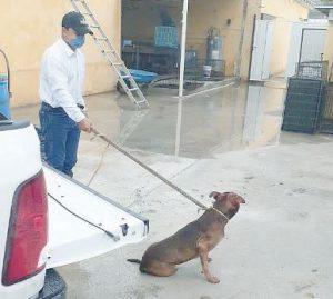 Ataca perro a abuelo