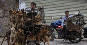 China prohíbe criar perros para consumo humano
