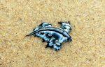 Dragón azul ponen en alerta playas de la Isla del Padre