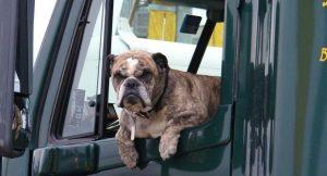 VIDEO: ¡Increíble! Perrito toca claxon de automóvil para apurar a su amo