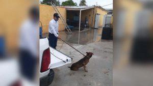 Perro ataca brutalmente a abuelito dejándolo grave en Nuevo Laredo