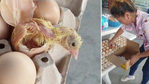 VIDEO: Pollito rompe cascarón de huevo que ya estaba en caja para su venta