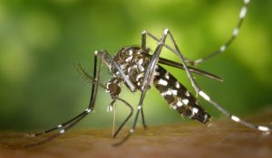 México registra primer caso de chikungunya del 2020