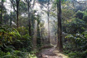 ¿Cuál es la relación entre el clima, la vegetación y la fauna?