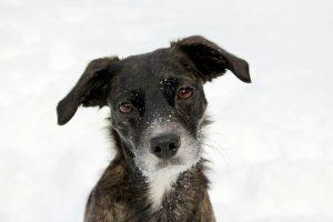 Día del Perro Sin Raza: ¿por qué se celebra a los lomitos mestizos?
