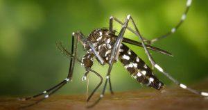 Alerta mundial por mosquito tigre, capaz de transmitir 22 enfermedades