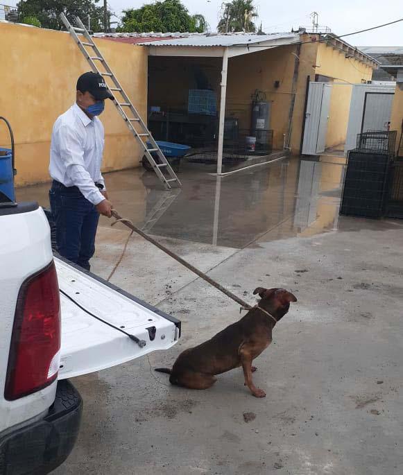 perro ataca abuelito