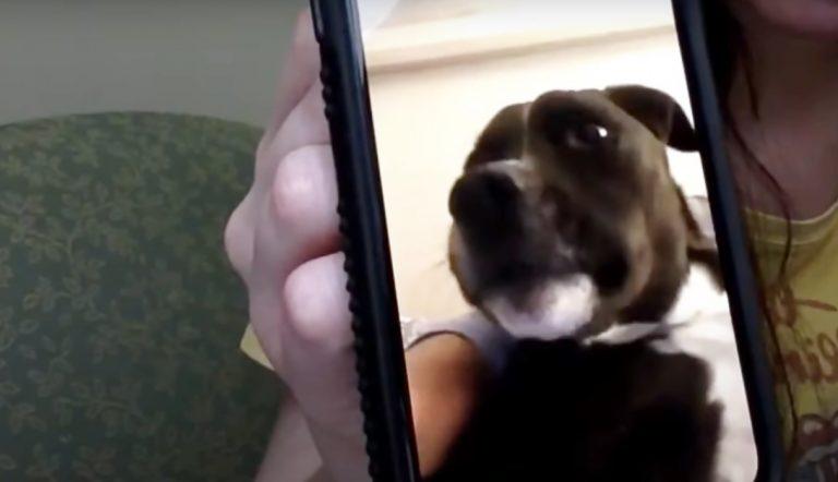 Perro se emociona al escuchar a su dueña, una enfermera que está lejos de él por el coronavirus